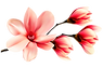 magnolia-flower-3791387_960_720.png