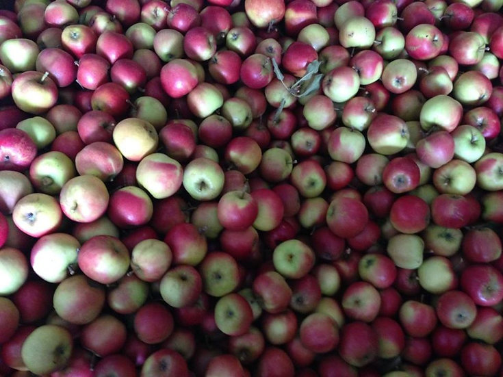 Irish Eating Apple ( Red Prince) Bag of 10 apples
