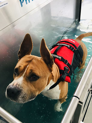 Hydrothérapie canine
