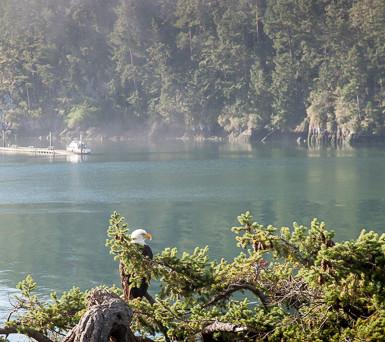 Eagle by Bowman Bay