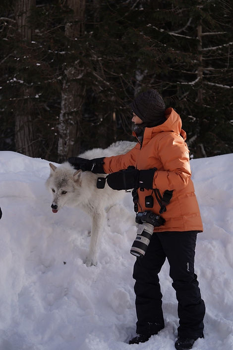 FM Wolf Walk.jpg