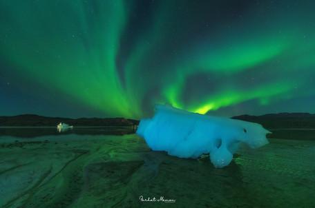 Polar Bear of the North