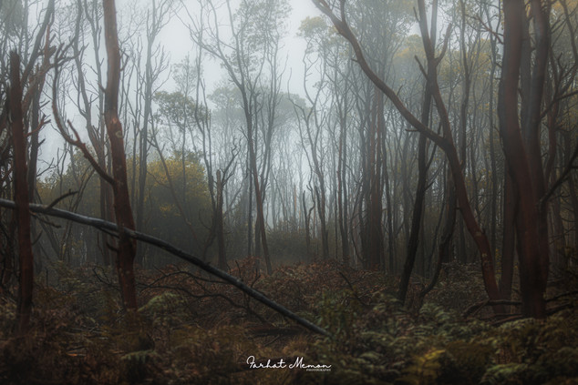 Moody Forests of Victoria