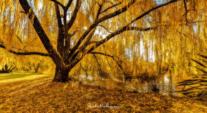 Veiled Autumn
