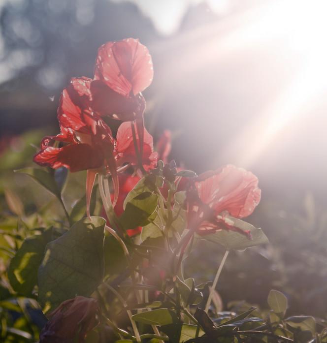 Unconditional Grace: How humanly forgiveness reveals God's grace
