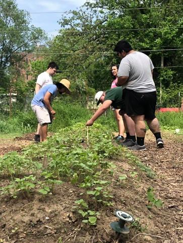 Delta Community Garden.jpg