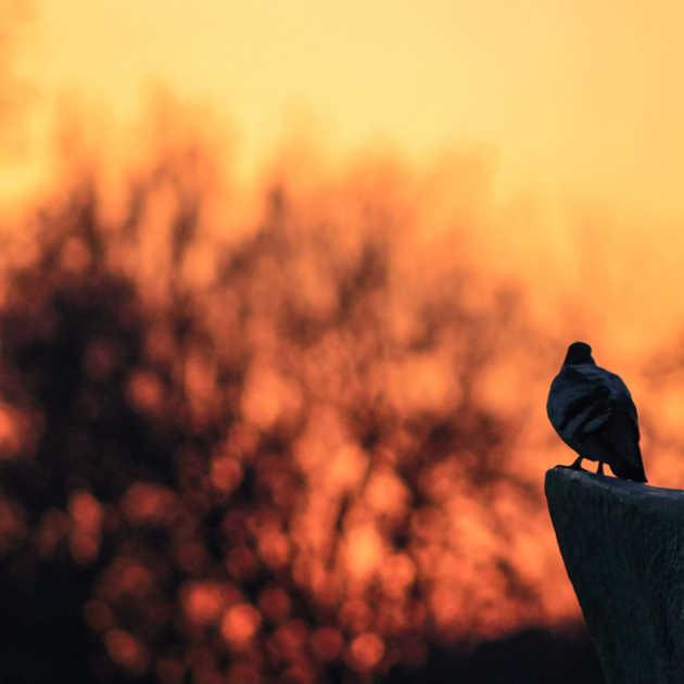 Kuş & Günbatımı