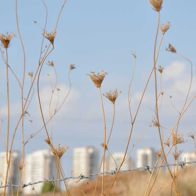 Çiçek & Dikenli Tel