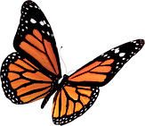 Flying-Butterflies-PNG-Clipart_edited.pn