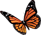 Flying-Butterflies-PNG-Clipart.png