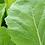 Thumbnail: Seasonal Garden Starter Pack - 36 Certified Organic Plug Plants
