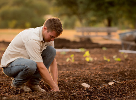 Growing Your Own Food During Autumn & Winter in Ireland