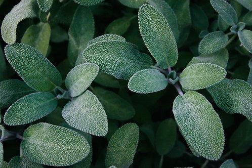 Sage Plant Certified Organic