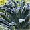 Thumbnail: Black Tuscany Kale  Organic Seeds