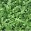 Thumbnail: Superfood Salad Bowl -  Certified Organic Plug Plants