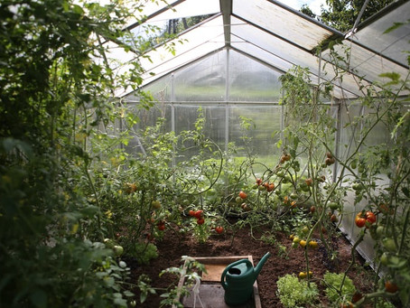 How to Choose a Greenhouse or Polytunnel