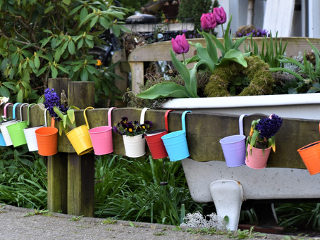 Five Reasons to Grow Onions & Garlic in Pots