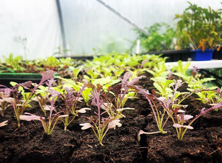 3 Easy Steps to Manage Polytunnel Heat