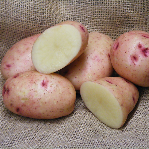 Mary's Rose Certified Organic Seed Potatoes