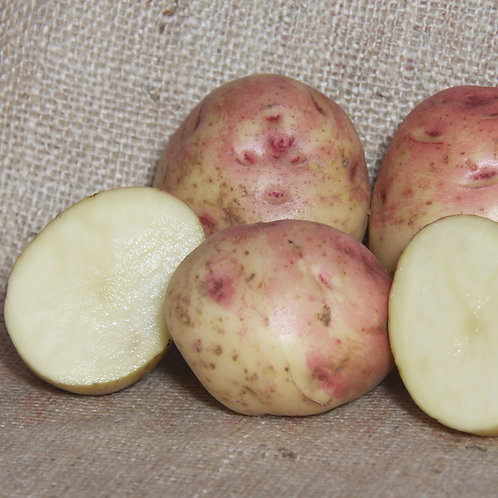 Cara Certified Organic Seed Potatoes