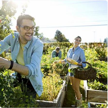 'Brighter Days Ahead' - 72 Organic Herb, Veg, Salad & Tomato Plug Plants