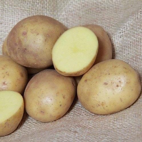 Colleen Certified Organic Seed Potatoes