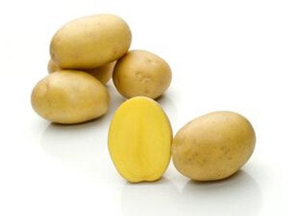 Belmonda Certified Organic Seed Potatoes