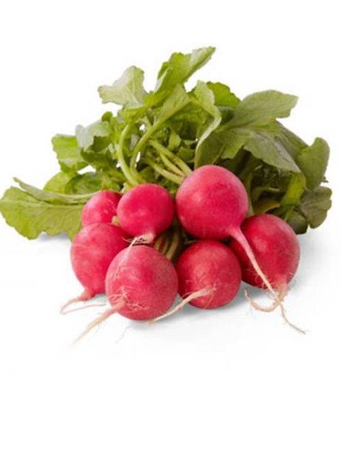Rambo Radish Organic Seeds