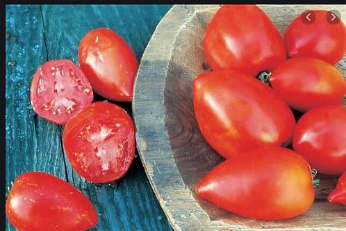 Amish Pasta Tomato - Organic Plants