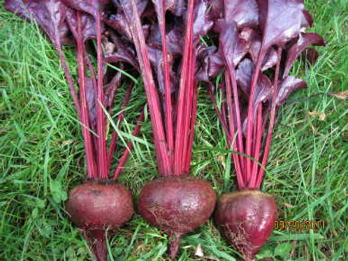 Beetroot (Bull's Blood)  Organic Seeds