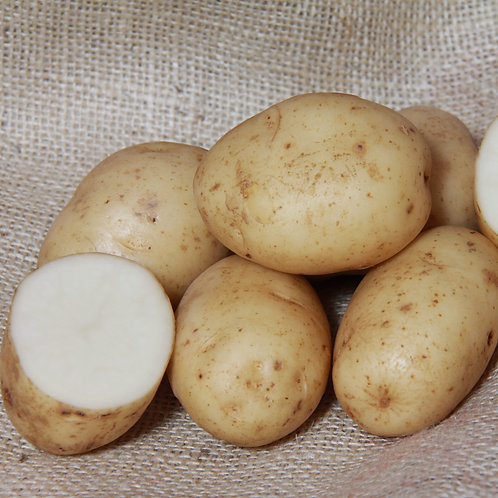 Maris Bard Certified Organic Seed Potatoes