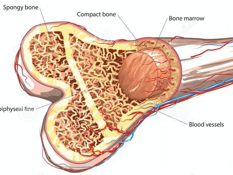"""Un biomateriale 3D usato come """"spugna"""" per invertire l'artrosi"""