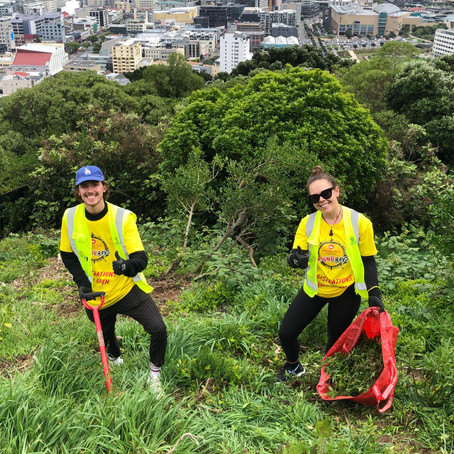 Adopt a Tree with BFS Round the Bays