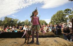 Goat Festival