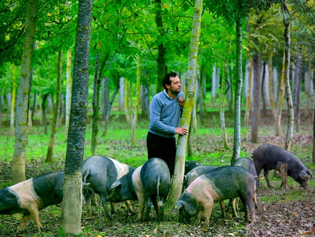 New Producer Profile: Terra di Siena Traditional Italian Salumeria