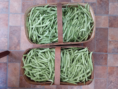 RECIPE: Beans and Taters, Appalachian Style