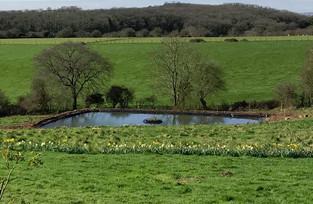 New pond for Hillside