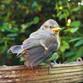 bethans bird.jpg