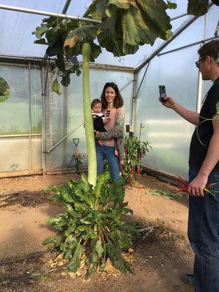 Ian's Giant veg growing Acheivements