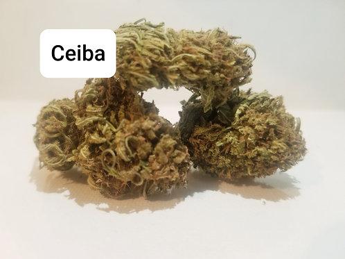 Longhouse Ceiba