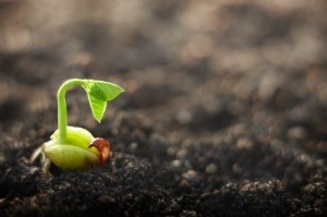 Story Seeds, Determination & Resilience
