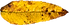 leaf-1665062_960_720.png