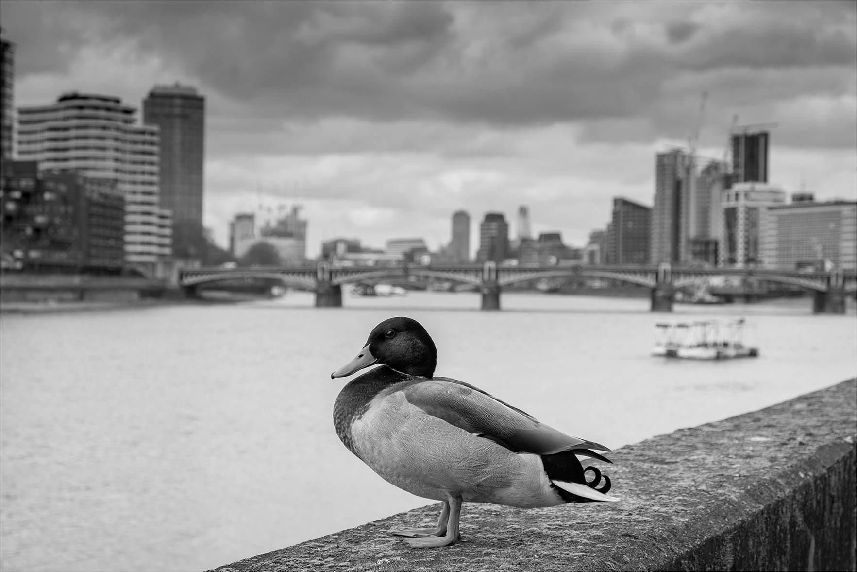 Ducklands