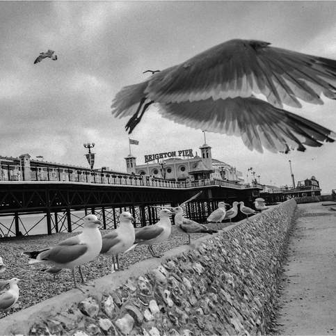 Let The Seagulls Go