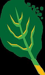 GRAAM pimpeurs de légumes épinard 1