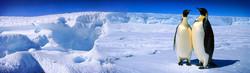 royal-leader-penguins-in-ice-lake-header