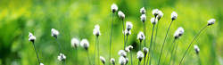 dreamy-white-flowers-green-grass-web-header