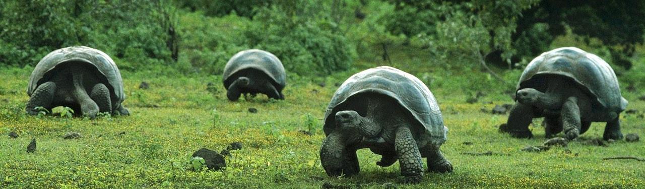 wonderful-walking-turtles-website-header