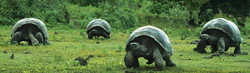 wonderful-walking-turtles-website-header