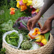 BERKELEY BASKET CSA